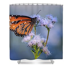 8x10 Metal - Queen Butterfly Shower Curtain by Tam Ryan