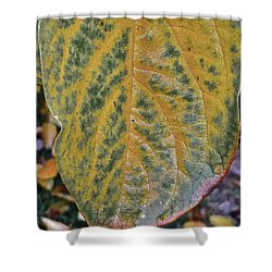 Shower Curtain featuring the photograph Leaf After Rain by Bill Owen