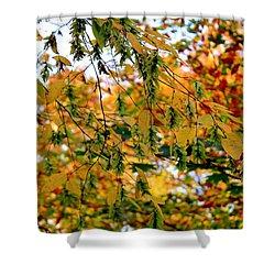 Leaf Breezes Shower Curtain by Deborah  Crew-Johnson