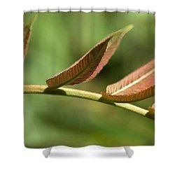 Leaf Bridge Shower Curtain
