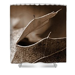 Shower Curtain featuring the photograph Leaf Collage 2 by Lauren Radke