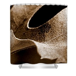 Shower Curtain featuring the photograph Leaf Collage 3 by Lauren Radke
