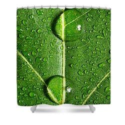 Leaf Dew Drop Number 10 Shower Curtain by Steve Gadomski