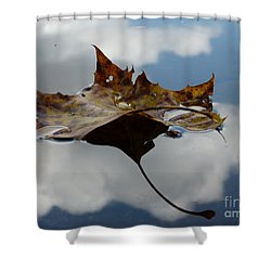 Leaf In Sky Shower Curtain by Jane Ford