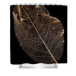 Leaf Lace Shower Curtain by Anne Gilbert