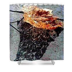 Shower Curtain featuring the photograph Leaf Lace In New Orleans Louisiana by Michael Hoard
