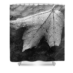 Leaf On Glass Shower Curtain