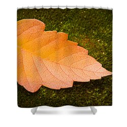 Leaf On Moss Shower Curtain by Adam Romanowicz