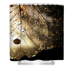 Shower Curtain featuring the photograph Faerie Wings II by Katie Wing Vigil