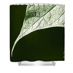 Leaf Shower Curtain by Tony Cordoza