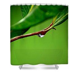 Leafdrop Shower Curtain