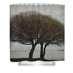 Shower Curtain featuring the photograph Leafless Couple by Ari Salmela