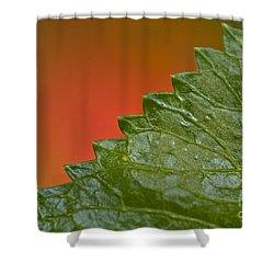 Leafy Shower Curtain by Heiko Koehrer-Wagner