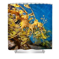 Leafy Sea Dragon Phycodurus Eques. Shower Curtain by Jamie Pham