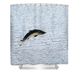 Leaping Chinook Shower Curtain by Mike  Dawson