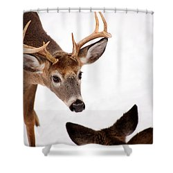 Learning A Lesson Shower Curtain by Karol Livote