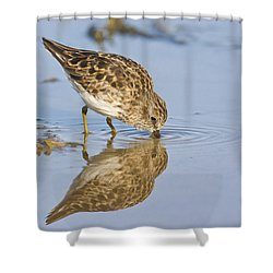 Least Sandpiper With A Reflection  Shower Curtain by Ruth Jolly
