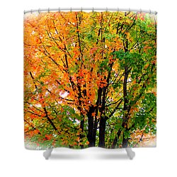 Leaves Changing Colors Shower Curtain by Cynthia Guinn