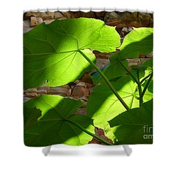 Leaves In Shadow Shower Curtain by Jane Ford
