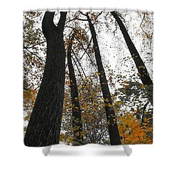 Shower Curtain featuring the photograph Leaves Lost by Photographic Arts And Design Studio