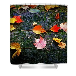 Leaves On Rock  Shower Curtain