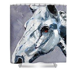 Legend - Sport Horse Shower Curtain