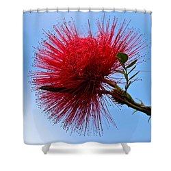 Lehua Blossom Shower Curtain by Venetia Featherstone-Witty