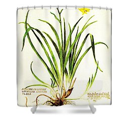 Lemon Daylily Botanical Shower Curtain by Rose Santuci-Sofranko