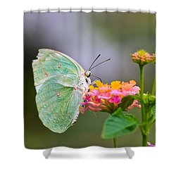 Lemon Emigrant Butterfly Shower Curtain