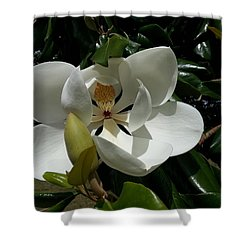 Shower Curtain featuring the photograph Lemon Magnolia by Caryl J Bohn