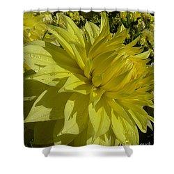 Lemon Yellow Dahlia  Shower Curtain by Susan Garren