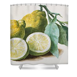 Lemons Shower Curtain by Pierre Joseph Redoute