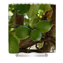 Lemons Trio Shower Curtain by Dany Lison