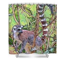 Lemur Sketch Shower Curtain by Dan Dooley