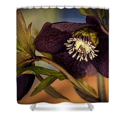 Lenten Rose Hellebore Floral Shower Curtain