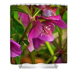 Shower Curtain featuring the photograph Lenten Rose by Jordan Blackstone