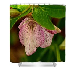 Shower Curtain featuring the photograph Lenton Rose Of Winter by Larry Bishop