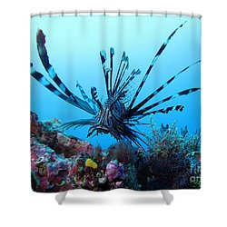 Leon Fish Shower Curtain by Sergey Lukashin