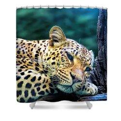 Shower Curtain featuring the photograph Leopard 1 by Dawn Eshelman