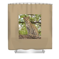 Leopard Cub Gaze Shower Curtain by Tom Wurl