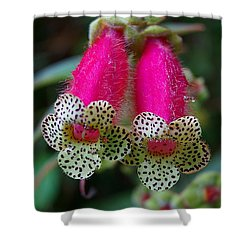 Leopard Flower - K. Digitaliflora Shower Curtain