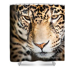 Leopard Resting Shower Curtain