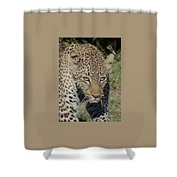 Shower Curtain featuring the photograph Leopard Stalking by Tom Wurl