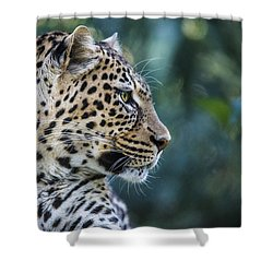 Leopard's Look Shower Curtain by Jaki Miller