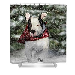 Snow Day Shower Curtain by Shelley Neff