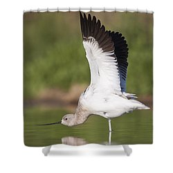 Let Me See You Stretch  Shower Curtain