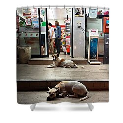 Shower Curtain featuring the photograph Let Sleeping Dogs Lie Where They May by Mr Photojimsf