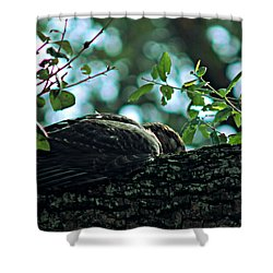 Let Sleeping Hawks Lie Shower Curtain