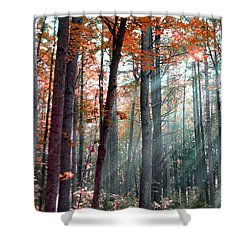 Let There Be Light Shower Curtain by Terri Gostola