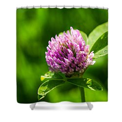 Let Us Live In Clover - Featured 3 Shower Curtain by Alexander Senin